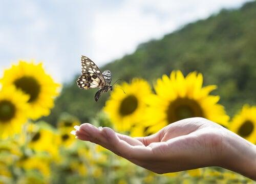 Mariposa en una mano para superar malos momentos