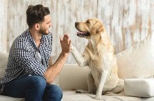 Perro y hombre chocando su mano y pata