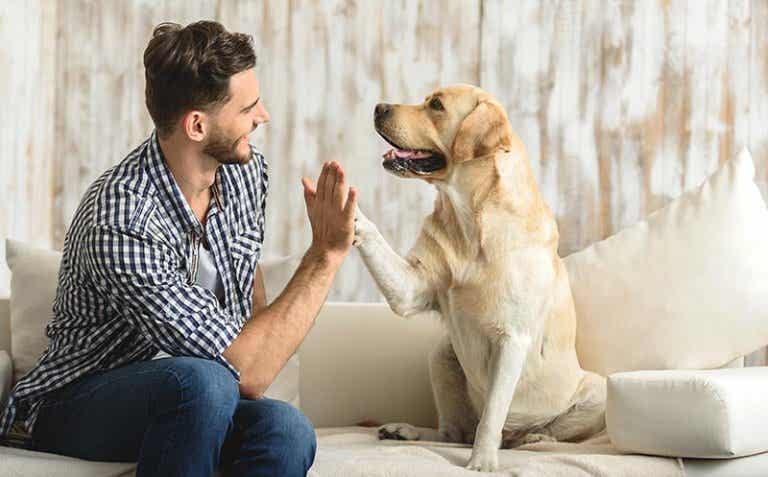 25 regalos maravillosos de nuestros perros