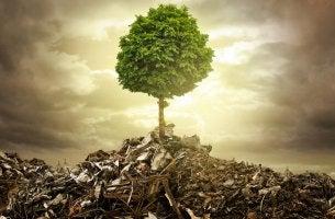 Metáfora de la basura: árbol naciendo en un vertedero