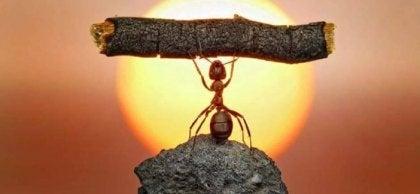 Hormiga levantando palo significando motivación