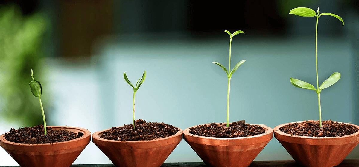 planta que representa los componentes de la Inteligencia Emocional