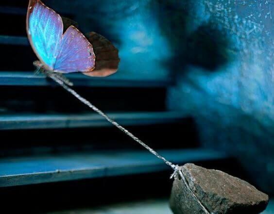 Mariposa atada con una cuerda a una piedra