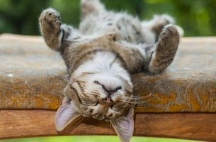 Gato durmiendo la siesta