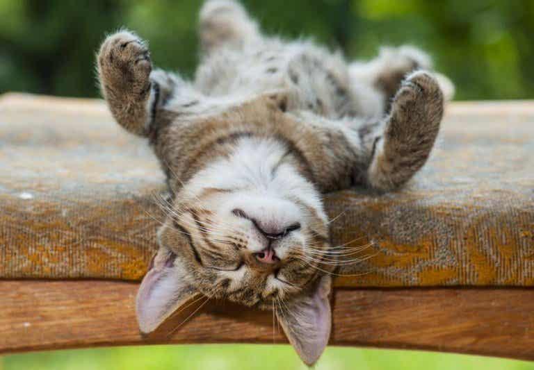 4 beneficios psicológicos de dormir la siesta
