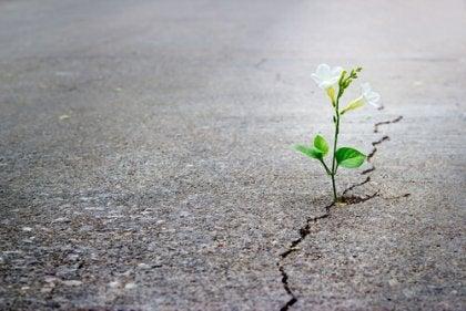 Planta naciendo del asfalto representando ser positivo