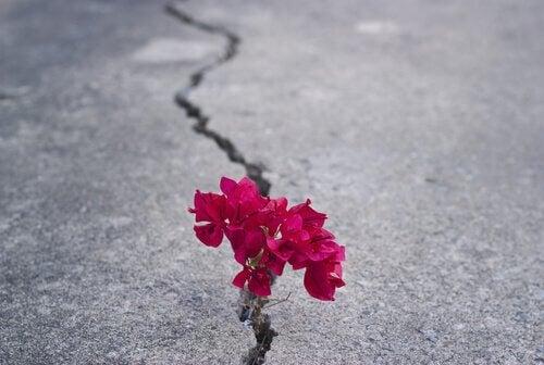 Flor en asfalto representando a personas resilientes