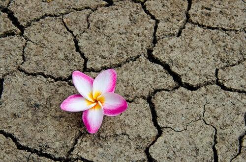 Flor crece en tierra seca