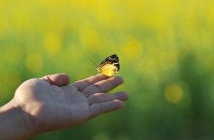 Mariposa posada en el dedo de una persona