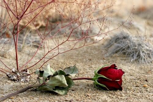 Rosa marchita en la arena