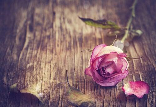 Rosa de color rosa sobre mesa de madera