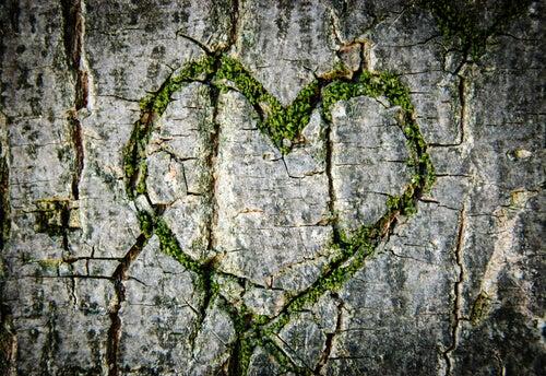 Corazón verde en el tronco de un árbol