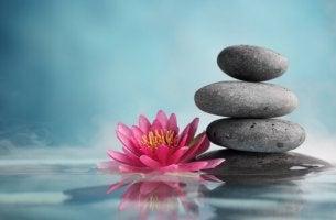 Piedras con flor zen