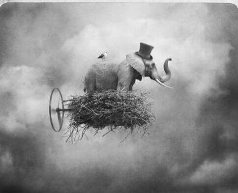 elefante en una nube