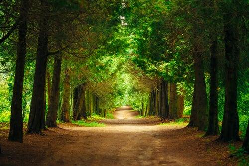 Camino con árboles