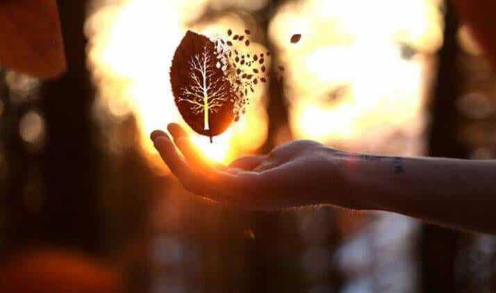 El único signo de superioridad que conozco es la bondad