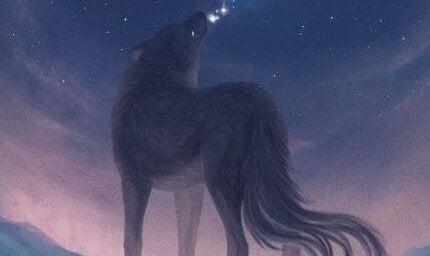 lobo aullando en noche rosada