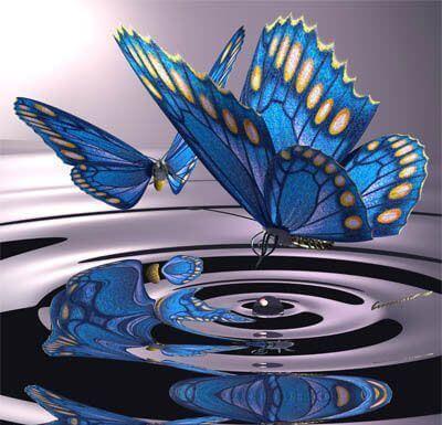 mariposa cambios