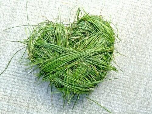 Corazón verde hecho de hierbas