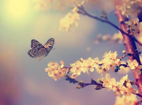 Mariposa volando cerca de un árbol