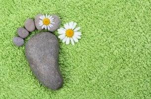 Piedra con forma de pie y una margrita