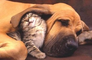 Gato junto a perro dormidos