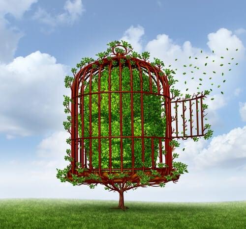 Cabeza de árbol encerrada en una jaula