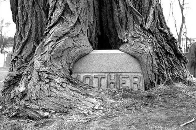 """lapida en un tronco con el epitafio """"madre"""""""