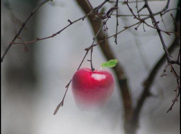 manzana suspendida en un árbol