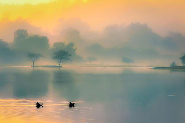 paisaje con niebla y dos cisnes