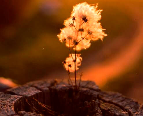 planta en el interior de un tronco representando lo que siempre recordamos