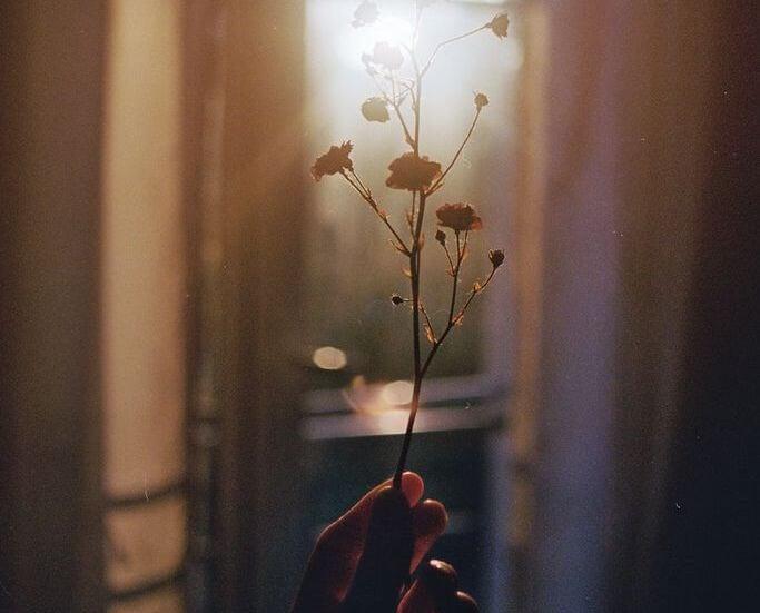 Mano con una flor representando cómo reclamar con asertividad