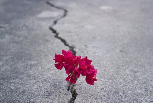 flowers growing in crack in the street