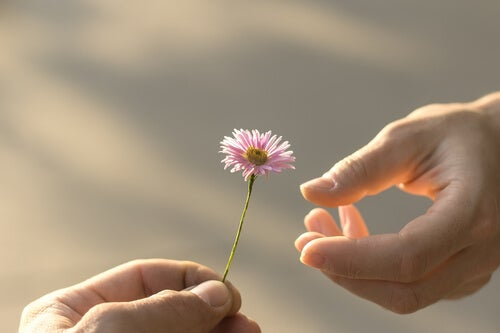 Hand giving a flower to another as a symbol of complete forgiveness.