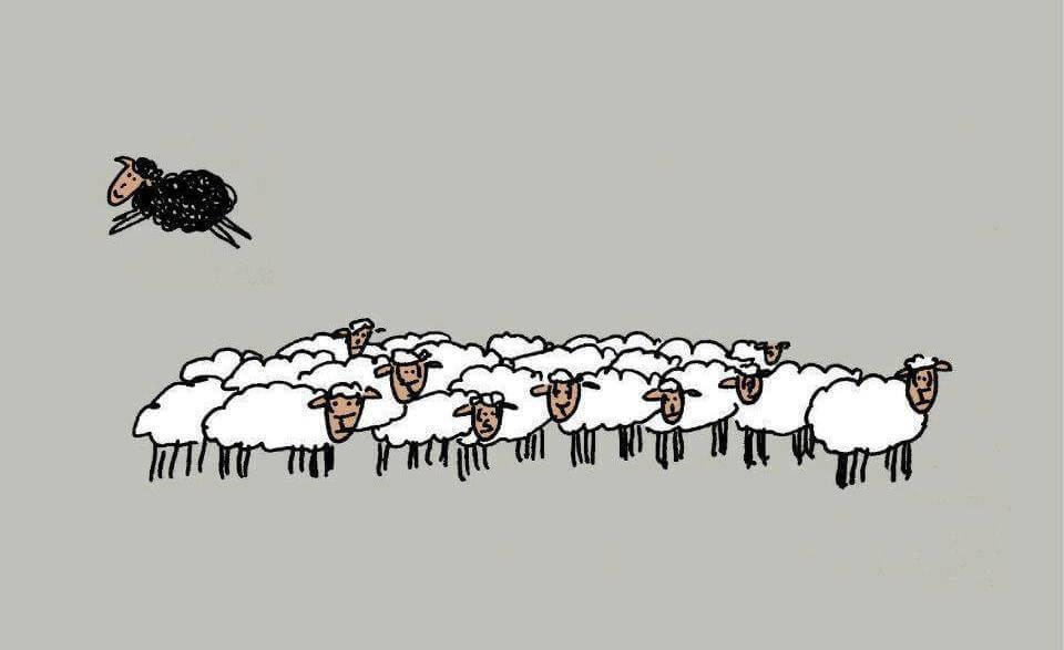 La oveja negra no es mala: solo es diferente