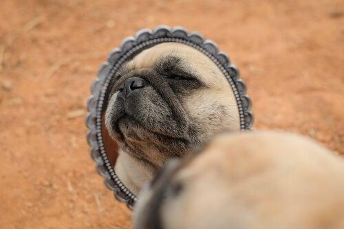 Perro infeliz mirando a un gesto