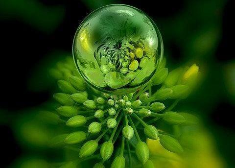 Gota de agua sobre una planta