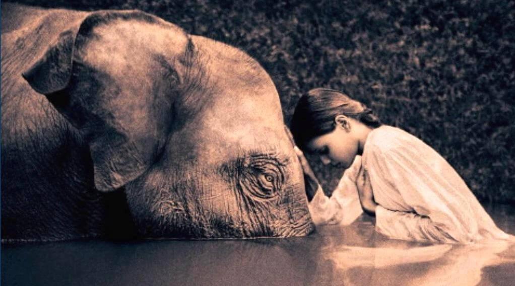niña inclinada ante un elefante