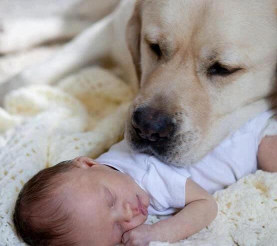 perro con la cabeza sobre un bebé