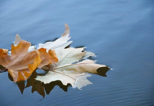 Hoja seca de un árbol sobre agua