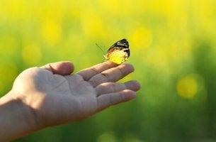 Mariposa instante para siempre