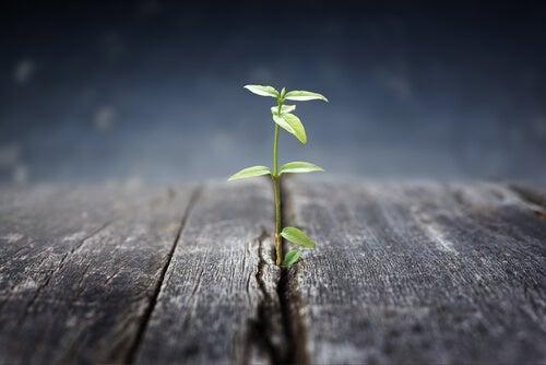 Planta creciendo en el suelo