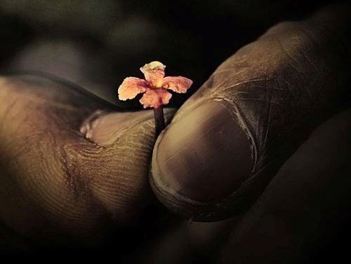 dedos con flor