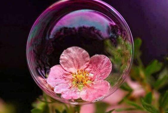 flor-dentro-de-burbuja