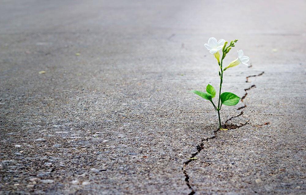 Flor en terreno desierto