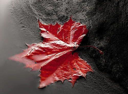 hoja roja llevada por la corriente simbolizando el destino