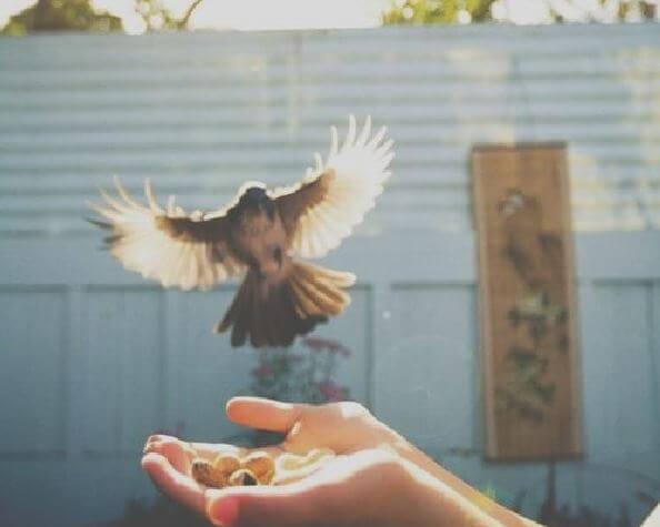 Huevos en la mano con pájaro volando