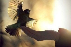 Mano soltando un pájaro representando la bondad