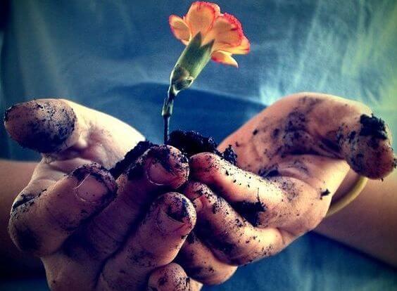 manos sujetando una flor