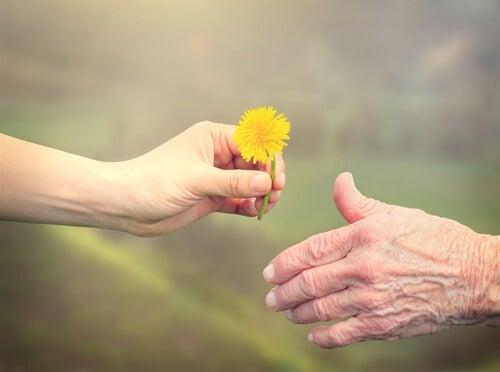 Manos de una chica joven dando una flor a una persona mayor